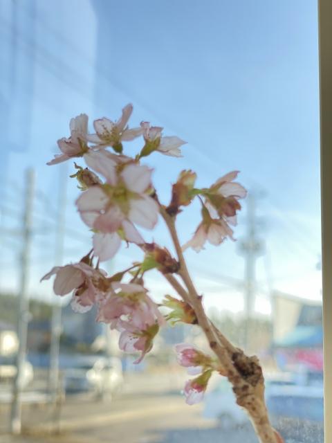 春らしく…